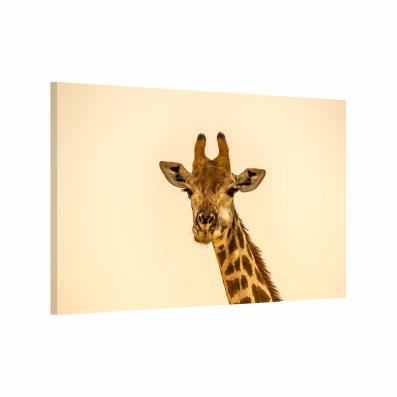 Girafa Tablou Canvas