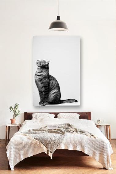 cat tablou canvas